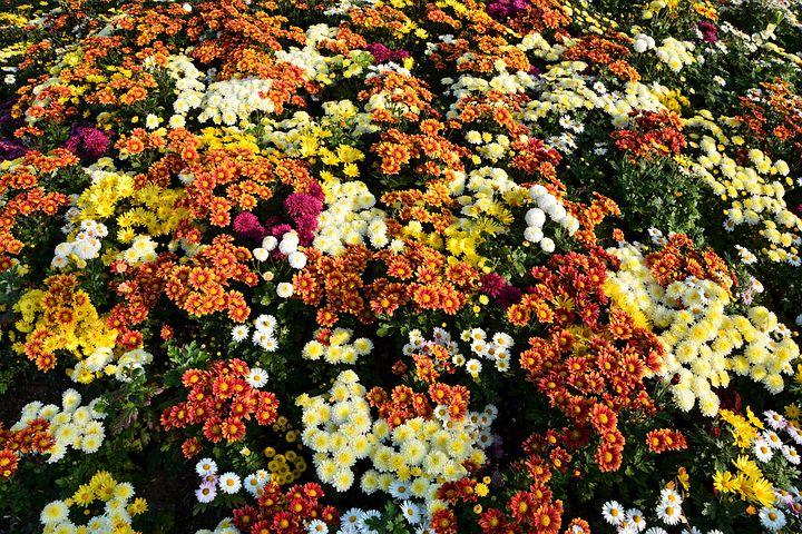 farbenfrohe Blüten alt=