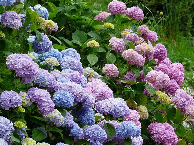 riesige Auswahl an den schönsten Sommerblumen alt=